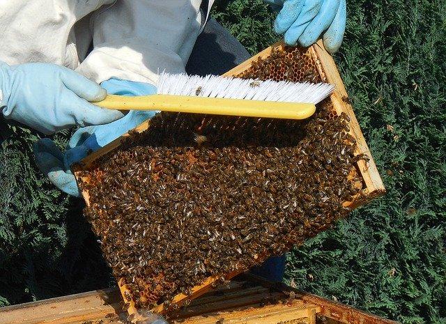 včelařství jako koníček