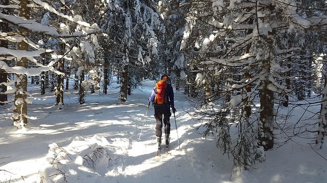 lyžař v lese